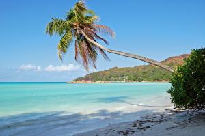 Seychelles - Palma